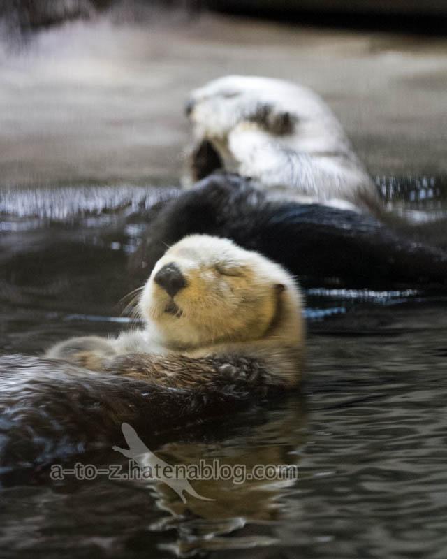 f:id:otters_yvonne:20201016191249j:plain