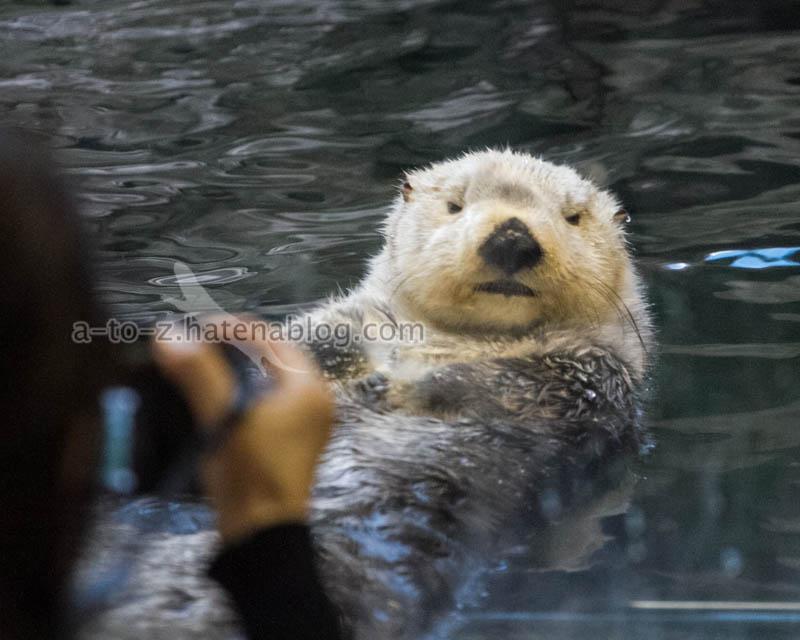 f:id:otters_yvonne:20201016191308j:plain