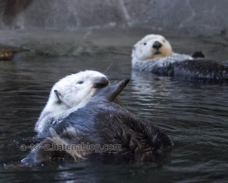 f:id:otters_yvonne:20201016191314j:plain