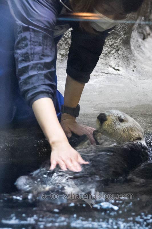 f:id:otters_yvonne:20201016191350j:plain