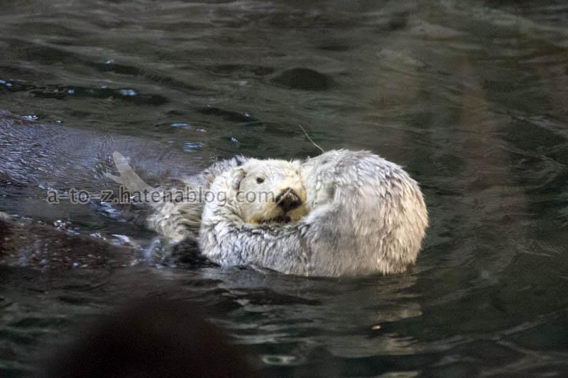 f:id:otters_yvonne:20201016191401j:plain