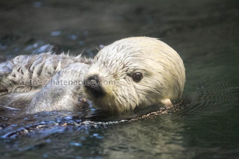 f:id:otters_yvonne:20201016191440j:plain