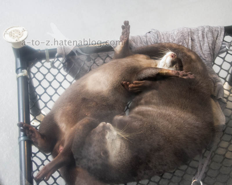 f:id:otters_yvonne:20201207101141j:plain