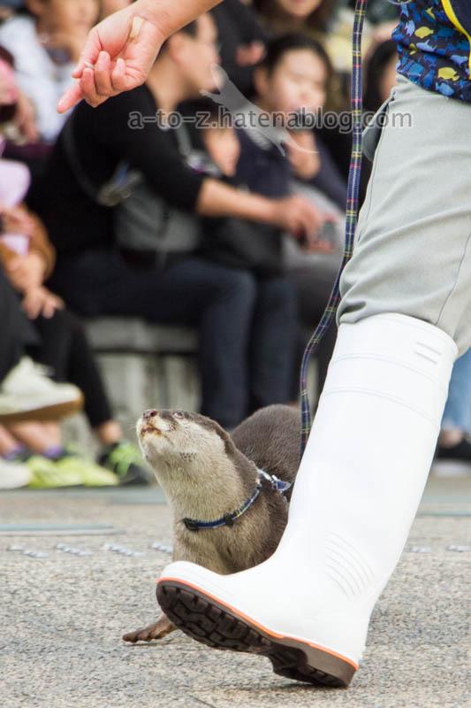f:id:otters_yvonne:20201207101215j:plain