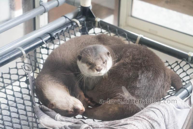 f:id:otters_yvonne:20201207101231j:plain