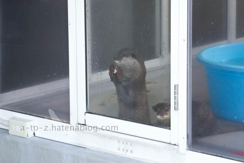 f:id:otters_yvonne:20201207101239j:plain