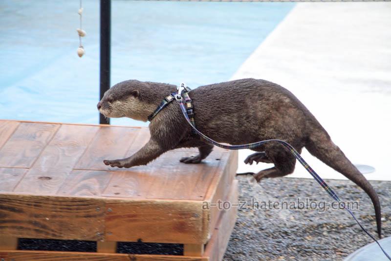 f:id:otters_yvonne:20201207101255j:plain