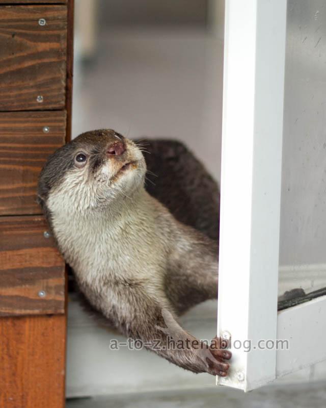 f:id:otters_yvonne:20201207101354j:plain