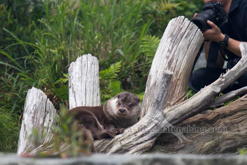 f:id:otters_yvonne:20210201174556j:plain