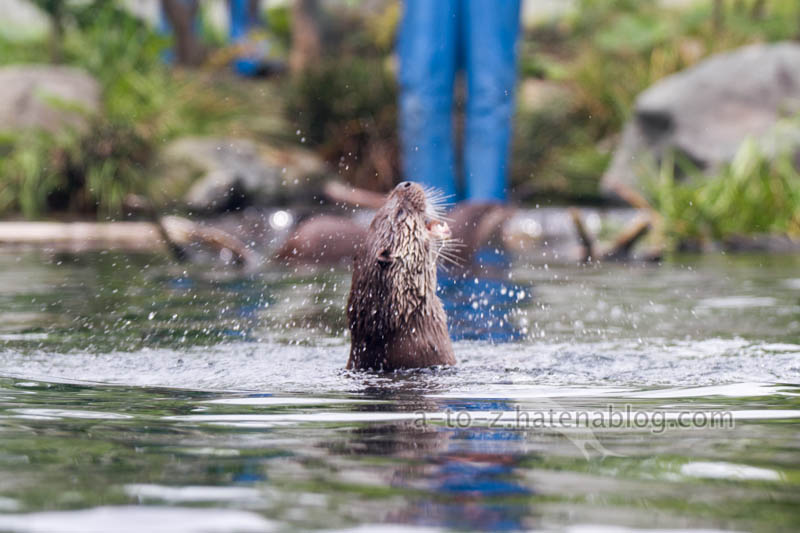 f:id:otters_yvonne:20210201174601j:plain