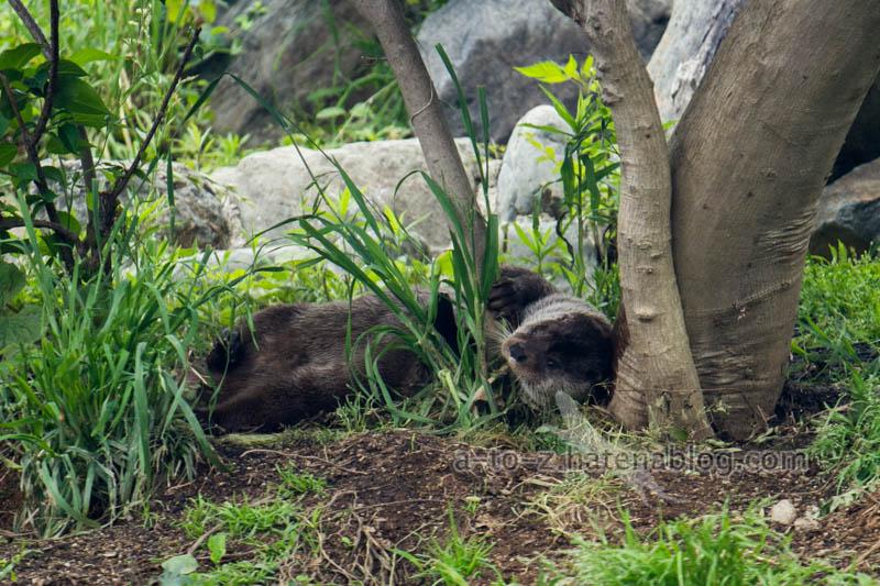 f:id:otters_yvonne:20210201174607j:plain