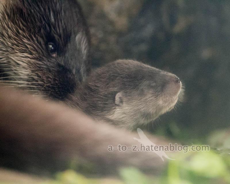f:id:otters_yvonne:20210201174612j:plain
