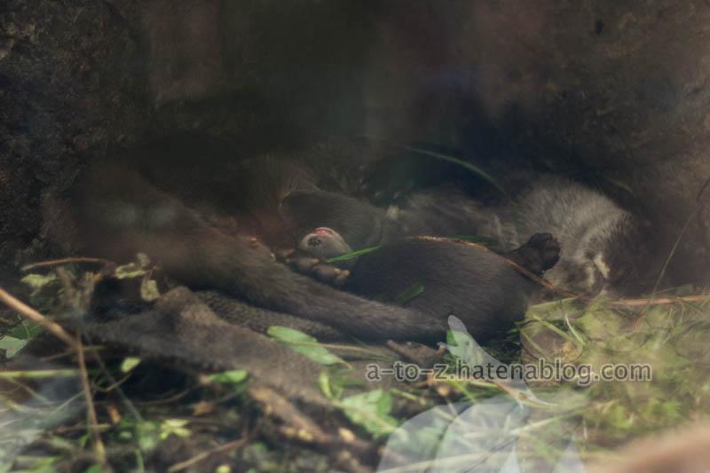 f:id:otters_yvonne:20210201174617j:plain