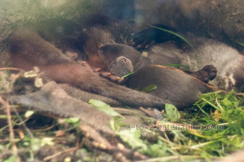 f:id:otters_yvonne:20210201174621j:plain