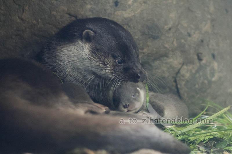 f:id:otters_yvonne:20210201174633j:plain