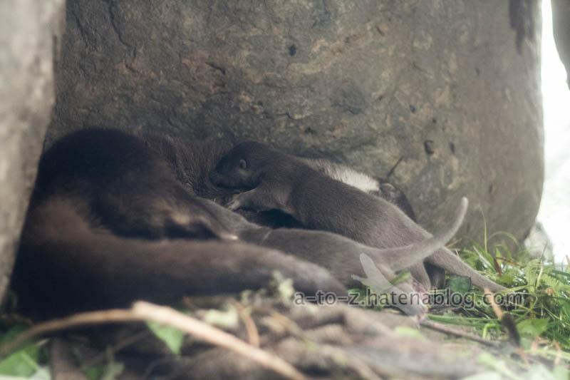 f:id:otters_yvonne:20210201174640j:plain