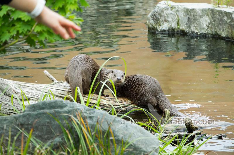 f:id:otters_yvonne:20210201174655j:plain