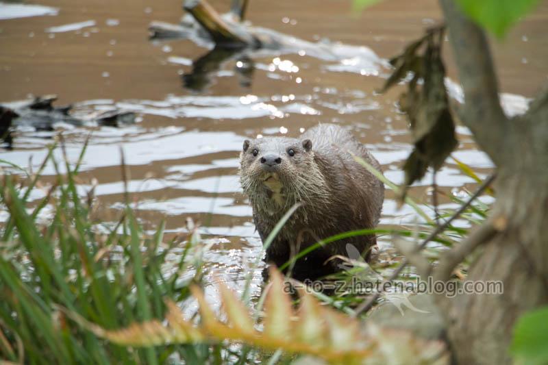 f:id:otters_yvonne:20210201174702j:plain