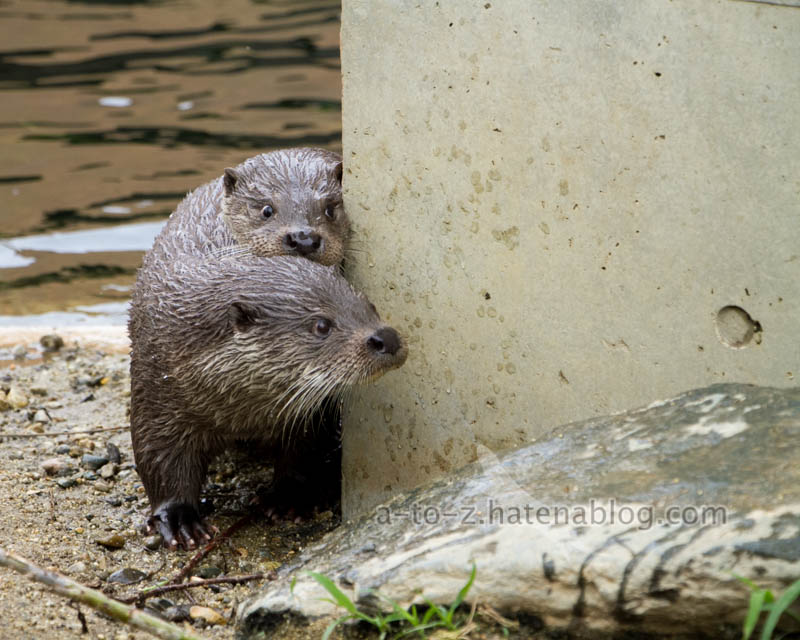 f:id:otters_yvonne:20210201174711j:plain