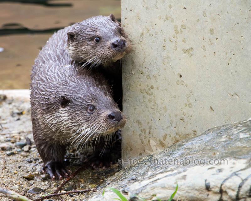 f:id:otters_yvonne:20210201174716j:plain