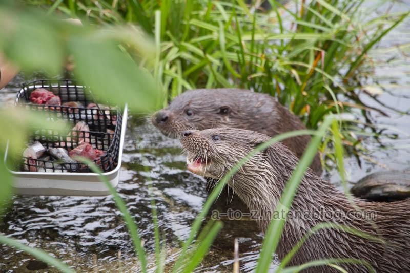 f:id:otters_yvonne:20210201174722j:plain