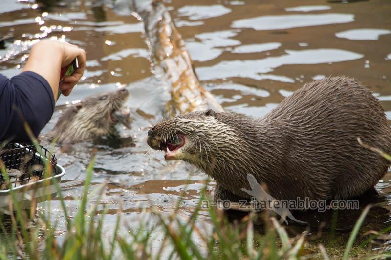 f:id:otters_yvonne:20210201174727j:plain
