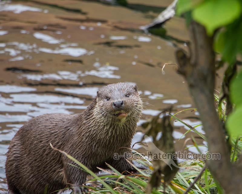 f:id:otters_yvonne:20210201174732j:plain