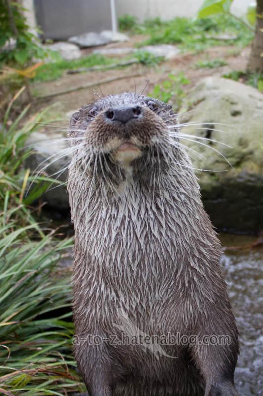 f:id:otters_yvonne:20210201174807j:plain