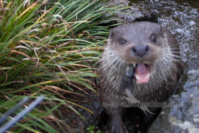 f:id:otters_yvonne:20210201174818j:plain