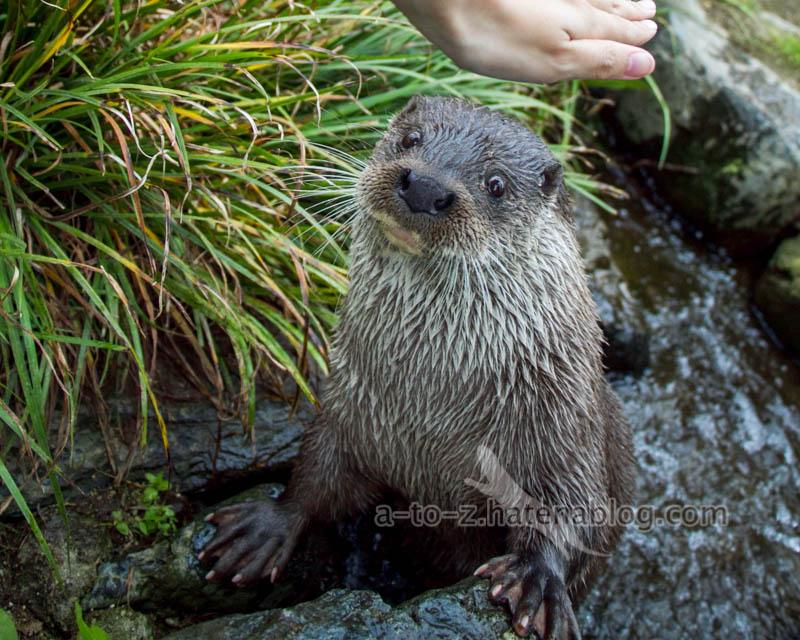 f:id:otters_yvonne:20210201174824j:plain
