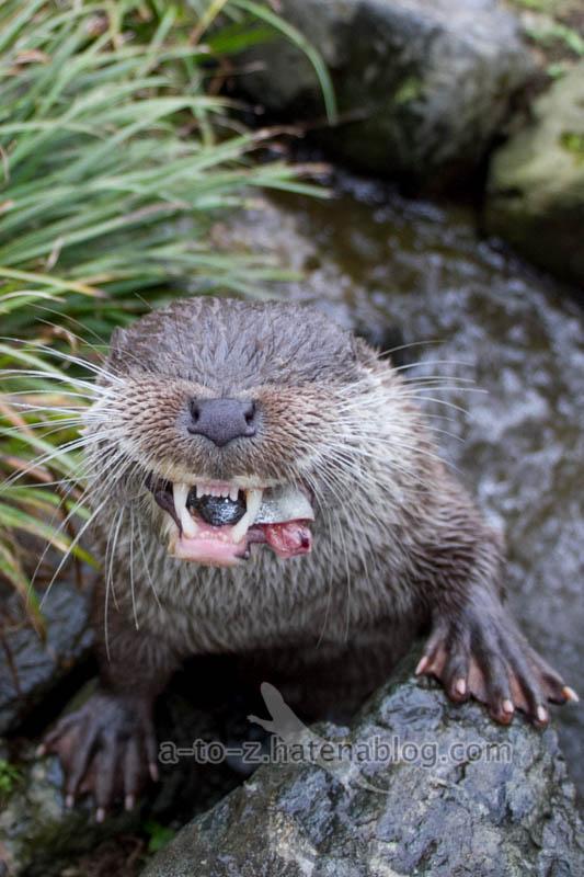 f:id:otters_yvonne:20210201174830j:plain