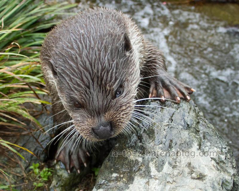 f:id:otters_yvonne:20210201174836j:plain