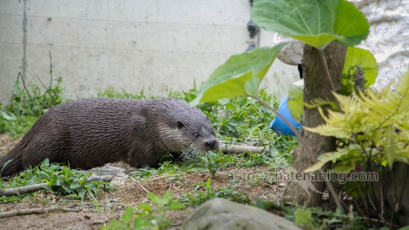 f:id:otters_yvonne:20210201174843j:plain