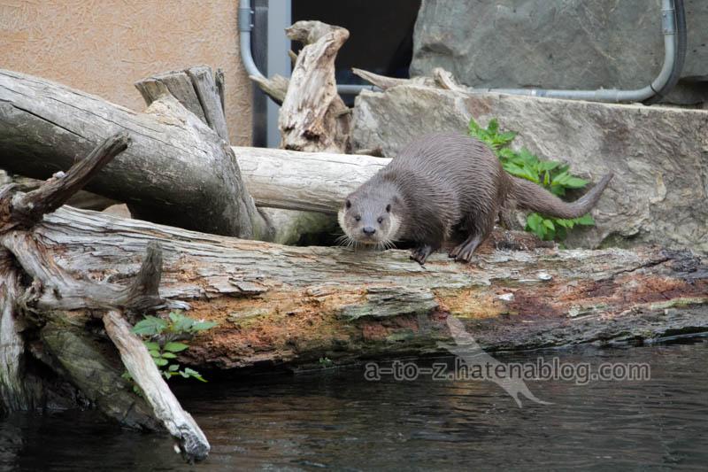 f:id:otters_yvonne:20210201174848j:plain
