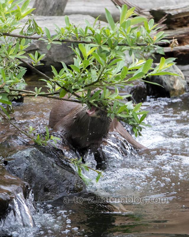 f:id:otters_yvonne:20210201174857j:plain