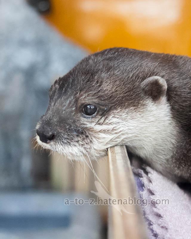 f:id:otters_yvonne:20210310214723j:plain