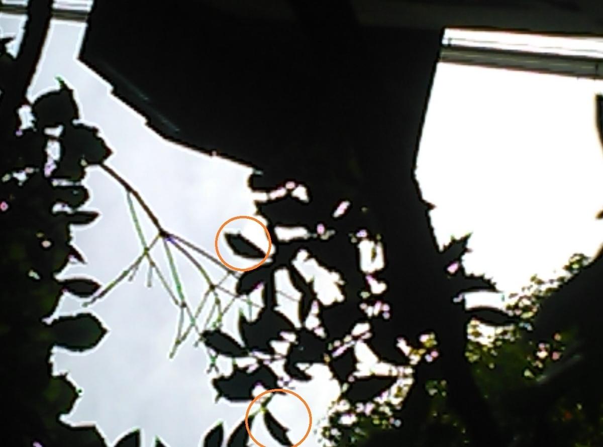f:id:otto-M:20200520174404j:plain