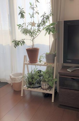 f:id:ouchibiyori:20190404073828j:plain
