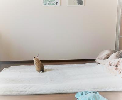 f:id:ouchibiyori:20190408184023j:plain