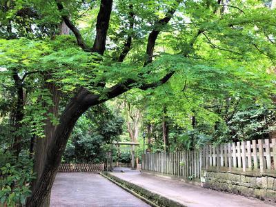 f:id:ouchibiyori:20190426154910j:plain