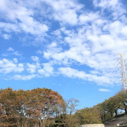 f:id:ouchibiyori:20191026183925j:plain