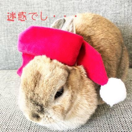f:id:ouchibiyori:20191217185611j:plain