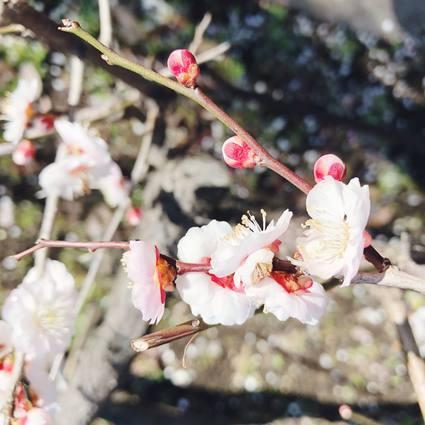 f:id:ouchibiyori:20200301212818j:plain