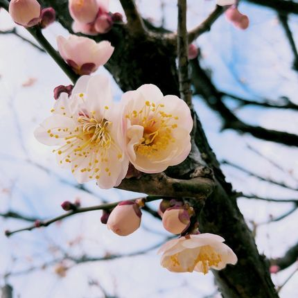 f:id:ouchibiyori:20210218200553j:plain