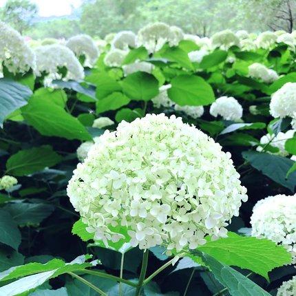 f:id:ouchibiyori:20210613193614j:plain