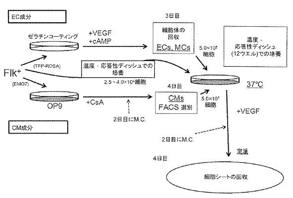 f:id:oukajinsugawa:20160506131005j:plain