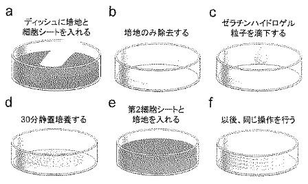 f:id:oukajinsugawa:20160506131015j:plain