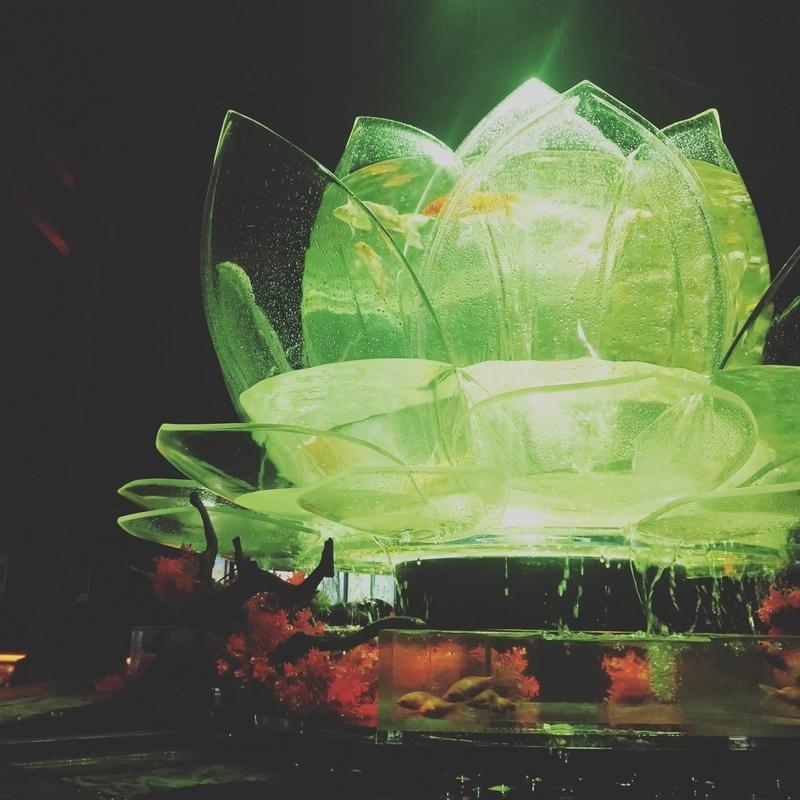 光る蓮の鉢に入れられた金魚