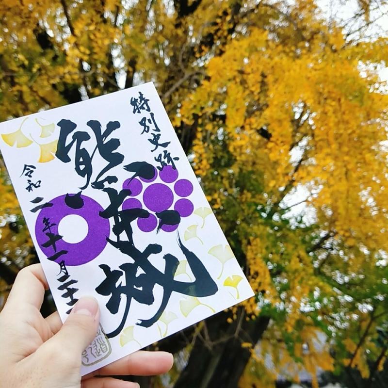 大イチョウを背景に撮った熊本城の季節限定の銀杏のデザインの御城印の写真