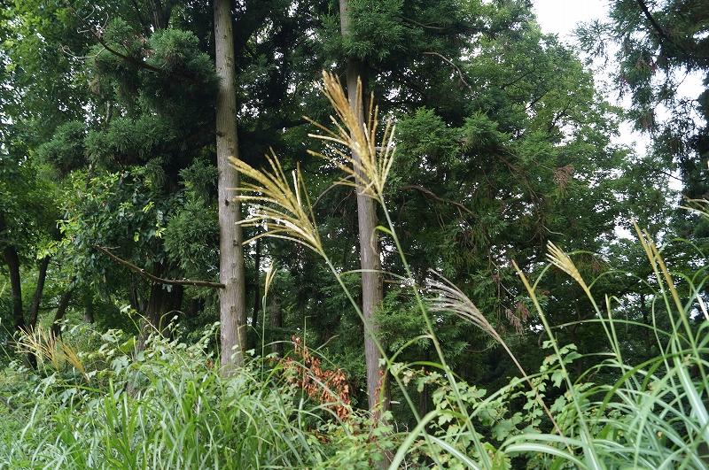 f:id:outdoor-kanazawa:20150809200930j:plain